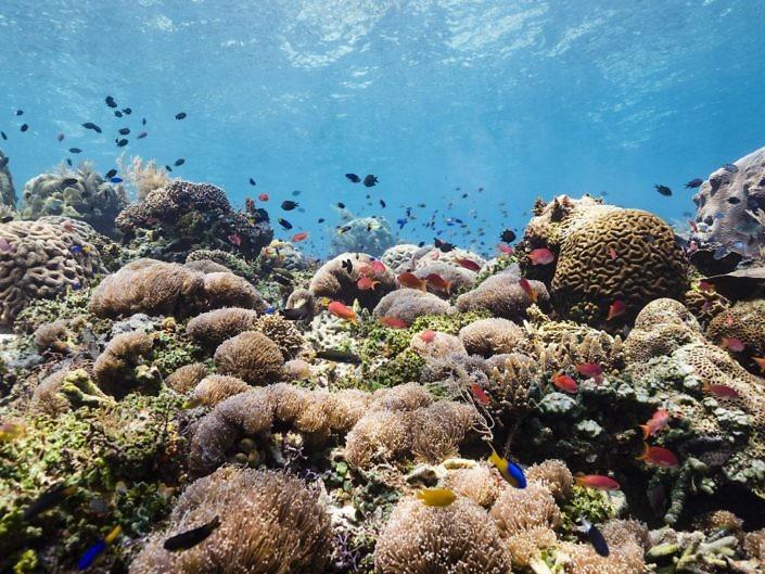 Bustling reef landscape in Indonesia.