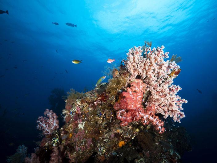 Soft corals landscape.