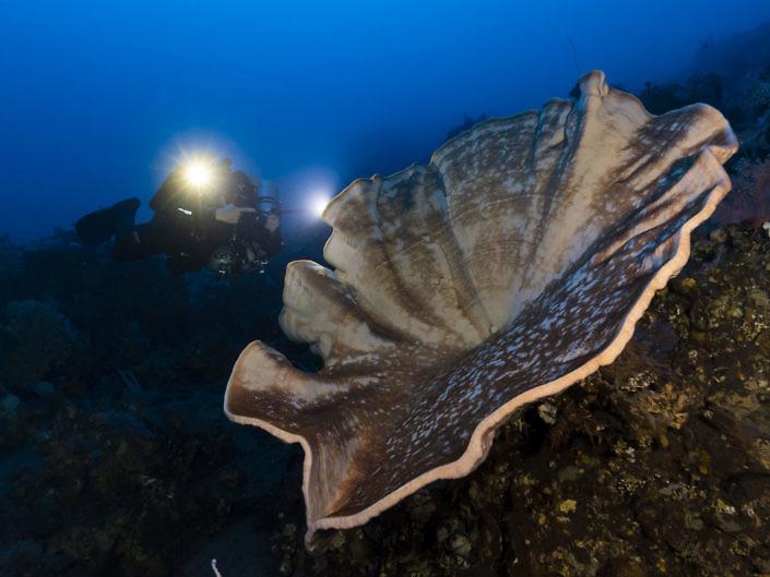 Diver & Giant sponge in the mesophotic zone.