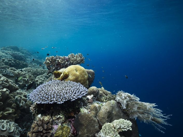 A quiet and peaceful reef in Indonesia.