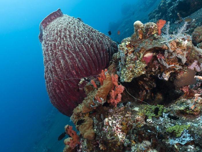 Nylon fishing line entangled in barrel sponge.