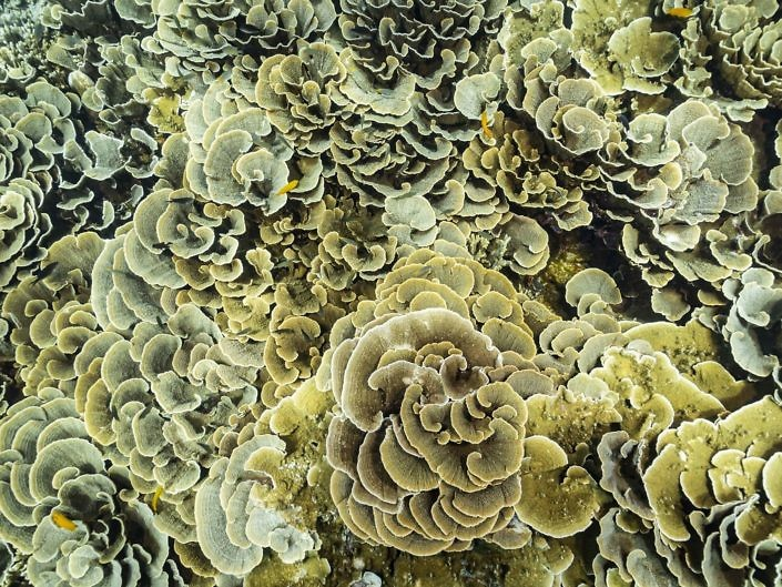 Hard corals from above, Indonesia.